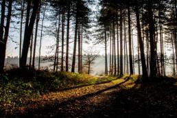 Forest near Worksop